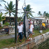 Barb's 357 lb Marlin Catch - Kwajalein - June 2008 :